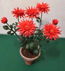 Dahlia - Red