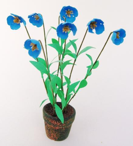 Blue Poppy ( Meconopsis) Flower Kit