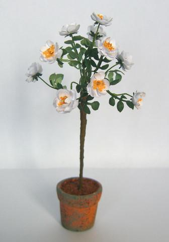 White Rose Flower Kit